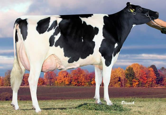 JB Holstein's Donnak VG89