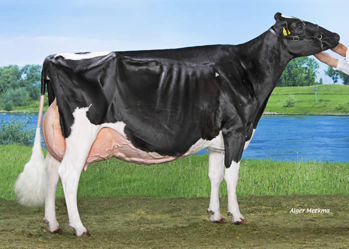 2019 NRM Grand Champion, Black & White